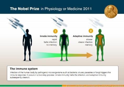NobelPrize2011-Medicine-1-small